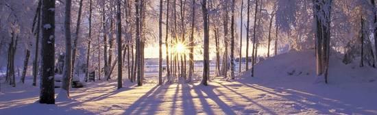 По-здрави през зимата